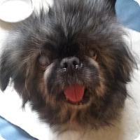 Adopt A Pet :: Millie Lee - Chantilly, VA