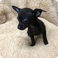 Adopt A Pet :: SOTO - Elk Grove, CA