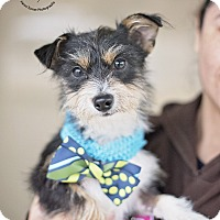 Adopt A Pet :: Blake - Kingwood, TX