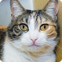 Adopt A Pet :: Amira - Irvine, CA