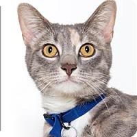 Adopt A Pet :: Anika - San Luis Obispo, CA