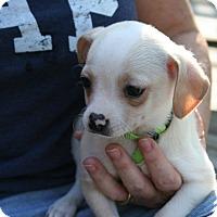Adopt A Pet :: Macy - Arden, NC