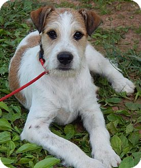 Petey(30 lb) New Pics & Video | Adopted Puppy | ps ...