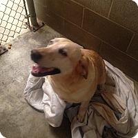 Adopt A Pet :: Maggie - Sparta, NJ