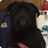 Adopt A Pet :: Tootie - Bellbrook, OH