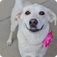 Adopt A Pet :: Aretha - McKinney, TX