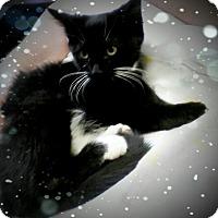 Adopt A Pet :: Azhara - Trevose, PA