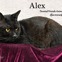 Adopt A Pet :: Alex - Ortonville, MI