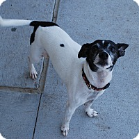 Adopt A Pet :: Jazzi (Rico) - Council Bluffs, IA