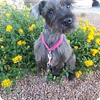 Adopt A Pet :: Ebony - Las Vegas, NV