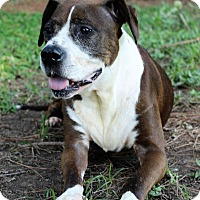 Adopt A Pet :: CoCo - Murphysboro, IL