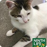 Adopt A Pet :: Alfie - Oakville, ON