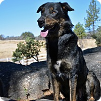 German Shepherd Dog Mix Dog for adoption in Mountain Center, California - Moses
