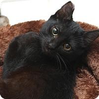 Adopt A Pet :: Condi - Sherman Oaks, CA
