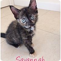 Adopt A Pet :: SAVANNAH aka Anya - Hamilton, NJ