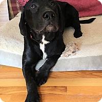 Adopt A Pet :: Hank - Jay, NY