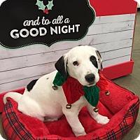 Adopt A Pet :: Champ - Monroe, GA