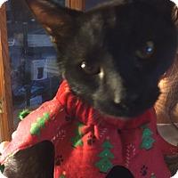 Adopt A Pet :: Hal - Salem, OH