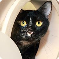 Adopt A Pet :: Violet - North Las Vegas, NV
