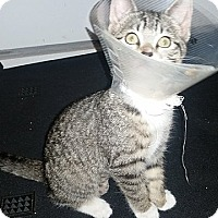 Adopt A Pet :: Sissy - Tampa, FL