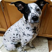 Adopt A Pet :: Freckles - Danbury, CT