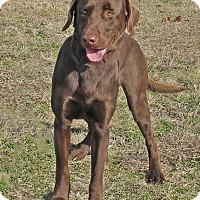 Adopt A Pet :: Flynn - Hillsboro, TX