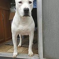 Adopt A Pet :: Layla - Denham Springs, LA