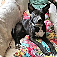 Adopt A Pet :: Pepper - Rutherfordton, NC