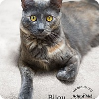 Adopt A Pet :: Bijou - Phoenix, AZ
