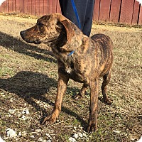 Adopt A Pet :: Esse is in Rhode Island!! - Plainfield, CT