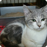 Adopt A Pet :: Strawberry Shortcake - Rochester, MN