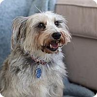 Adopt A Pet :: Mimi - Rigaud, QC