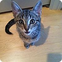 Adopt A Pet :: Edgar, Eydie, Evelyn, & Hazel - Chicago, IL
