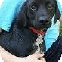 Adopt A Pet :: Baby Chance - Marlton, NJ