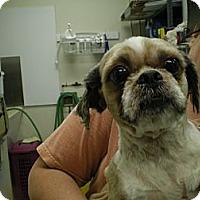 Adopt A Pet :: Louie - Apex, NC
