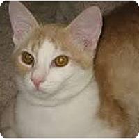 Adopt A Pet :: Mouse - Phoenix, AZ