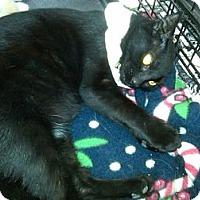 Adopt A Pet :: Rosa - Sterling Hgts, MI