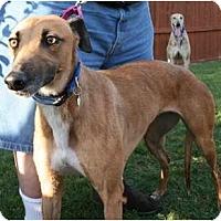Adopt A Pet :: PTL Rea Mae
