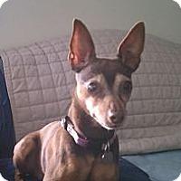 Adopt A Pet :: Mia - Springvale, ME