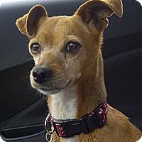 Adopt A Pet :: Wanda - Salem, OR