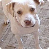 Adopt A Pet :: MATILDA - Paron, AR