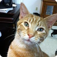Adopt A Pet :: Miles - Trevose, PA