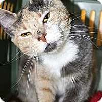 Adopt A Pet :: Betty - Xenia, OH