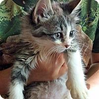 Adopt A Pet :: Bella - Riverhead, NY