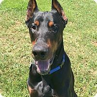 Adopt A Pet :: Sogo - Arlington, VA