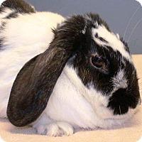 Adopt A Pet :: Riley - Conshohocken, PA