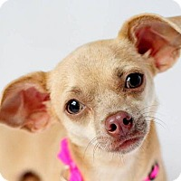 Adopt A Pet :: Ree - Fort Lauderdale, FL