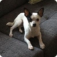 Adopt A Pet :: Zora - Rockaway, NJ