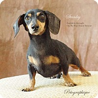 Adopt A Pet :: Stanley - Henderson, NV