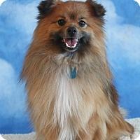 Adopt A Pet :: KOJO - conroe, TX